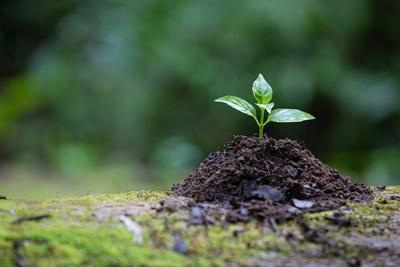 Guide: Sådan får du en mere bæredygtig hverdag